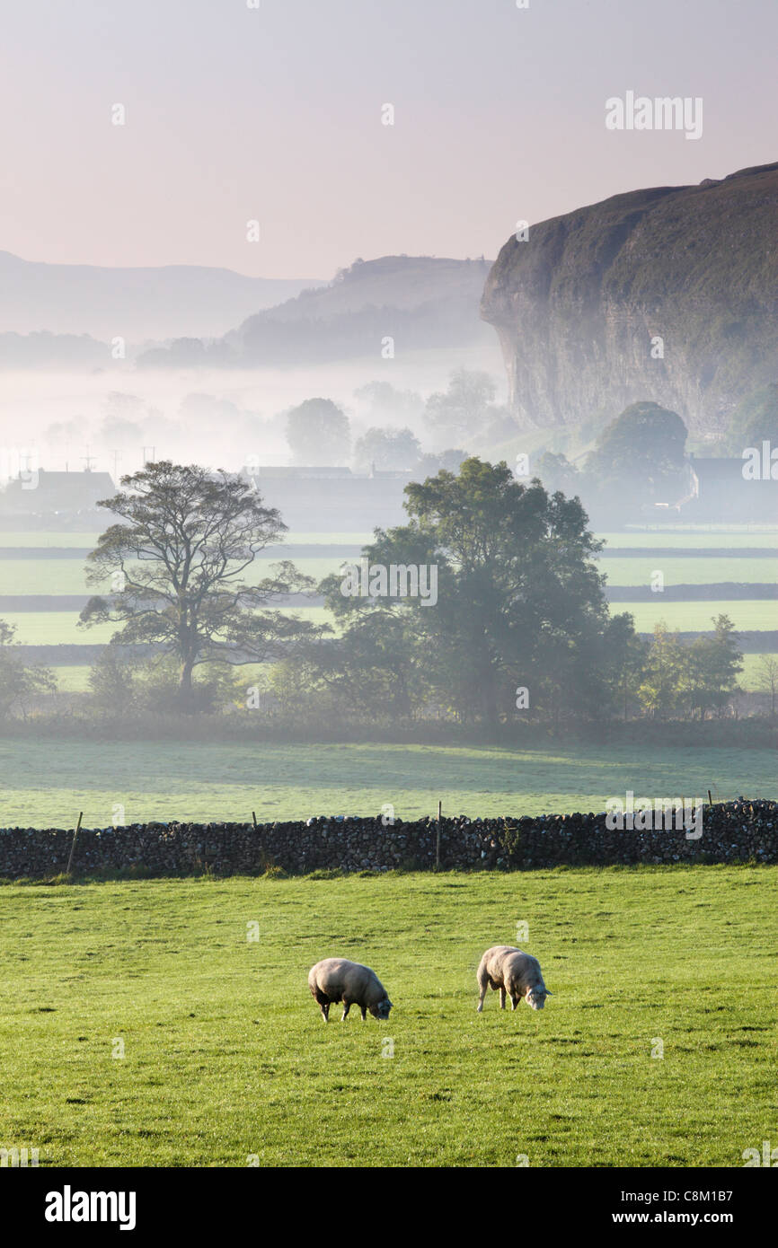 Sheep grazing in the mist covered fields with Kilnsey Crag in the distance near Kilnsey in Wharfedale, Yorkshire, - Stock Image