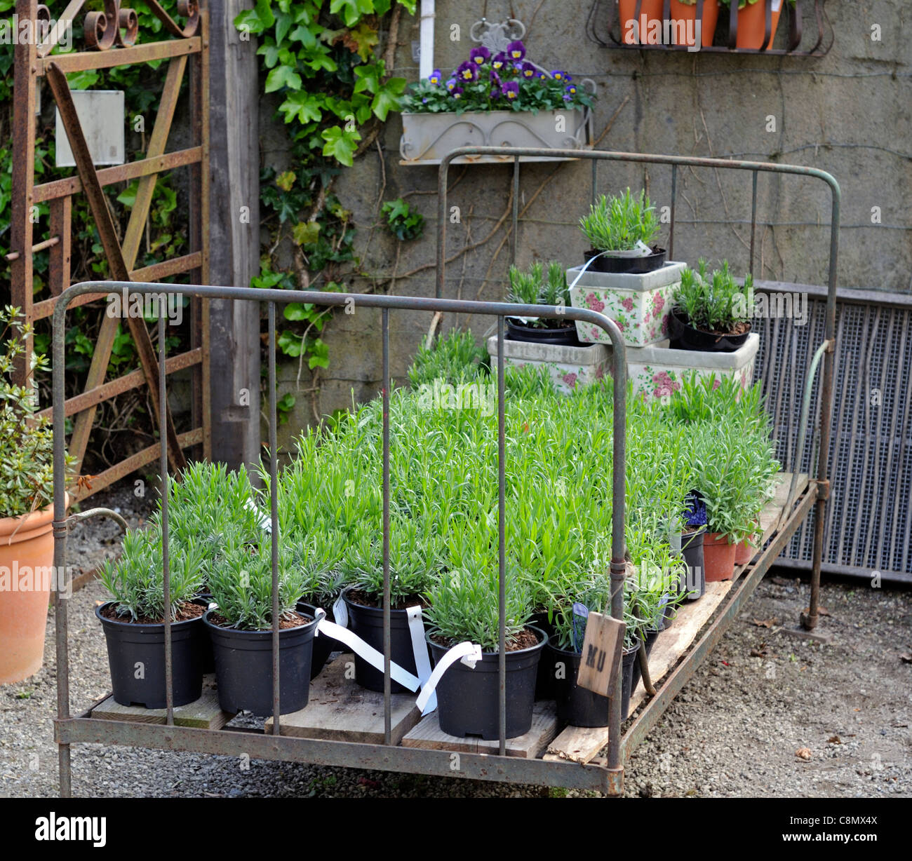 wrought iron bedstead being used as a raised flowerbed bed ironic irony humour comic garden centre recycle alternate - Stock Image