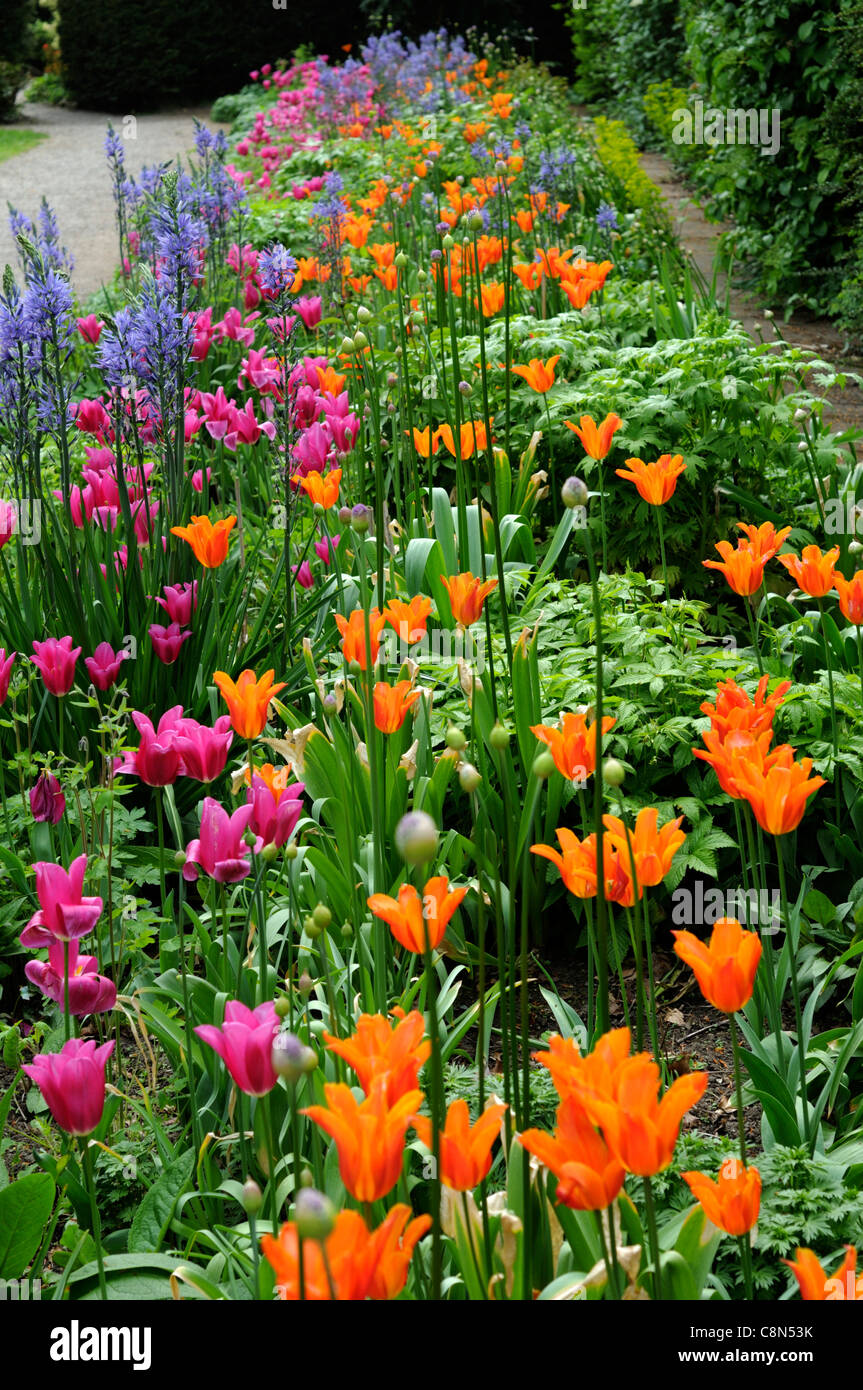 Spring Border Bed Hot Colours Colors Perennial Flowering Bulbs