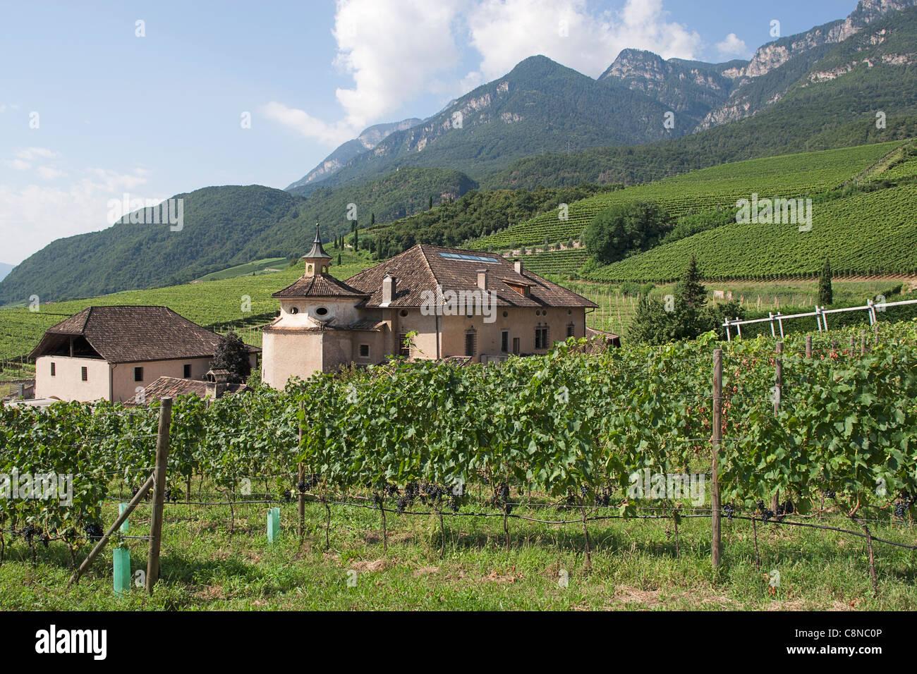 Italy, Trentino-Alto Adige, Manicor vineyard, near Bolzano - Stock Image
