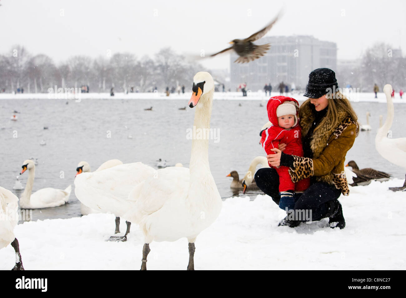 Mom Showing Swans To Her Son In Hyde Park London While Snowing