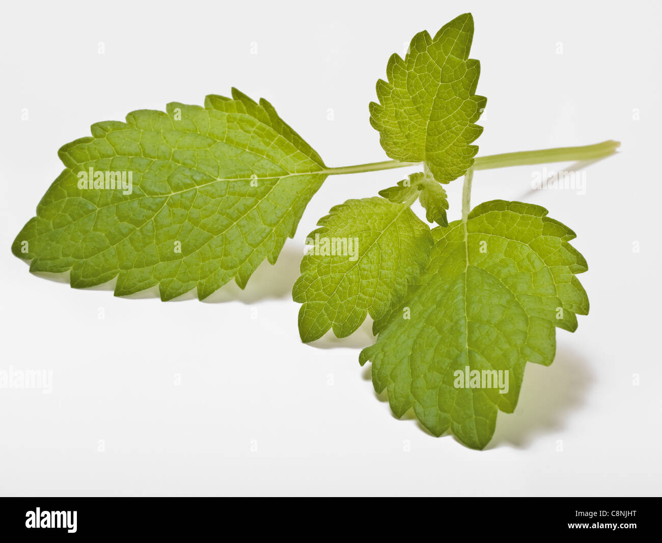 Detail photo of Lemon balm leaves Stock Photo
