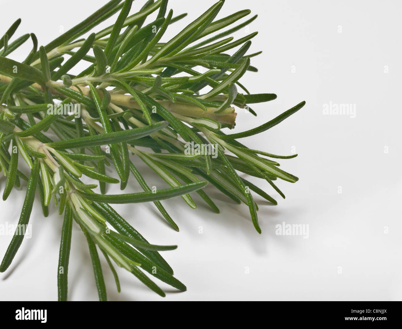 Detailansicht von Rosmarin-Zweigen | Detail photo of Rosemary Sprigs - Stock Image