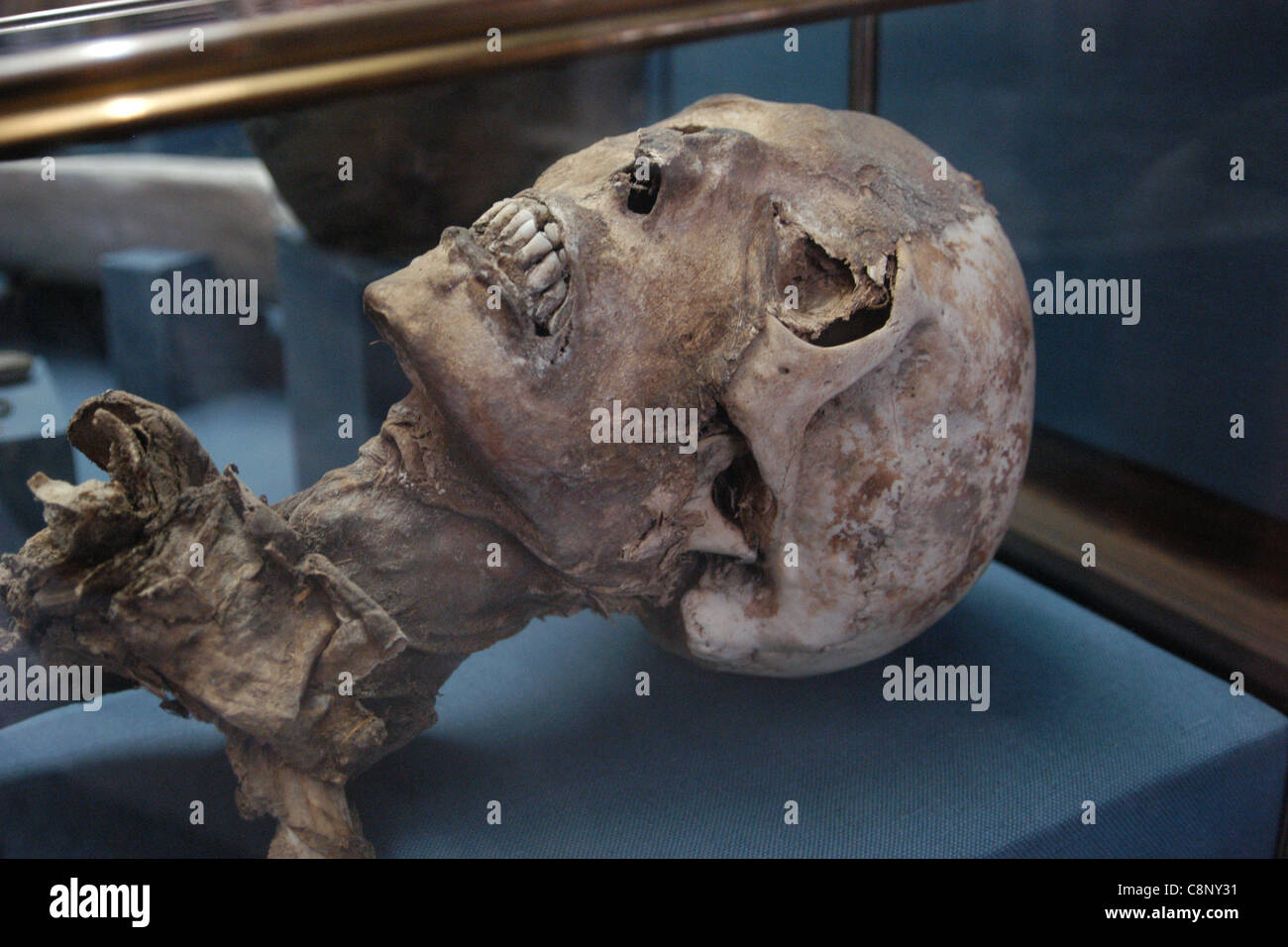 Altai mummy seen in the State Historical Museum in Moscow, Russia. - Stock Image