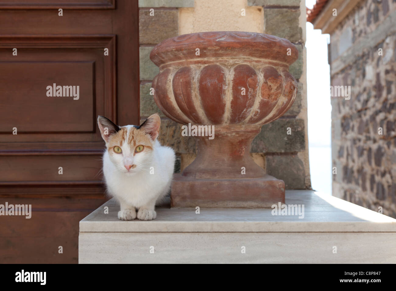Cat in front of a house near a vase in the city of Mithymna , Lesbos, Greece - Stock Image