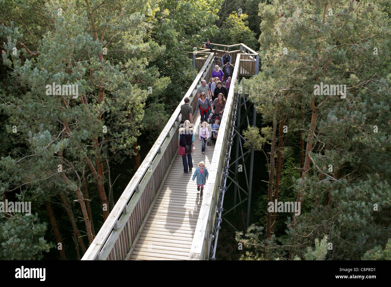 A tree top walk in the Salcey Forest, Northamptonshire. - Stock Image