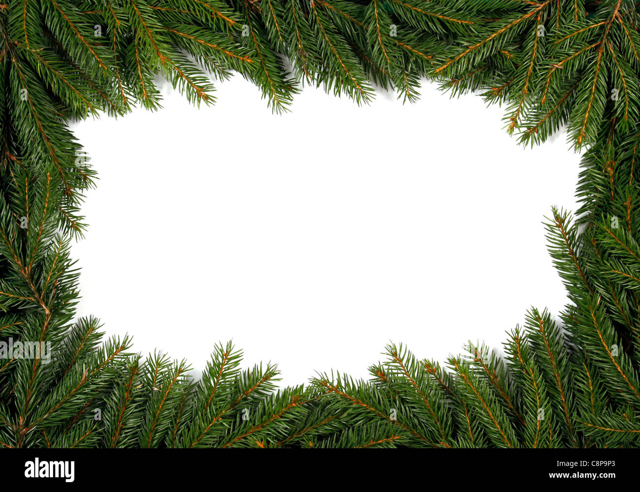 Frame from green twigs of the spruce - Stock Image