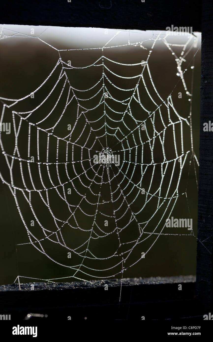 Spiders Web - Stock Image