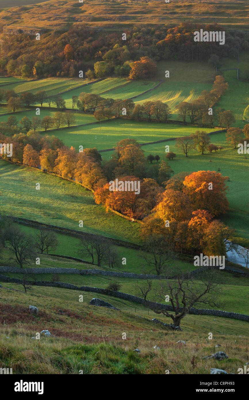 The first rays of sunlight hit the brightly colored autumn foliage of Arncliffe in Littondale, Yorkshire Stock Photo