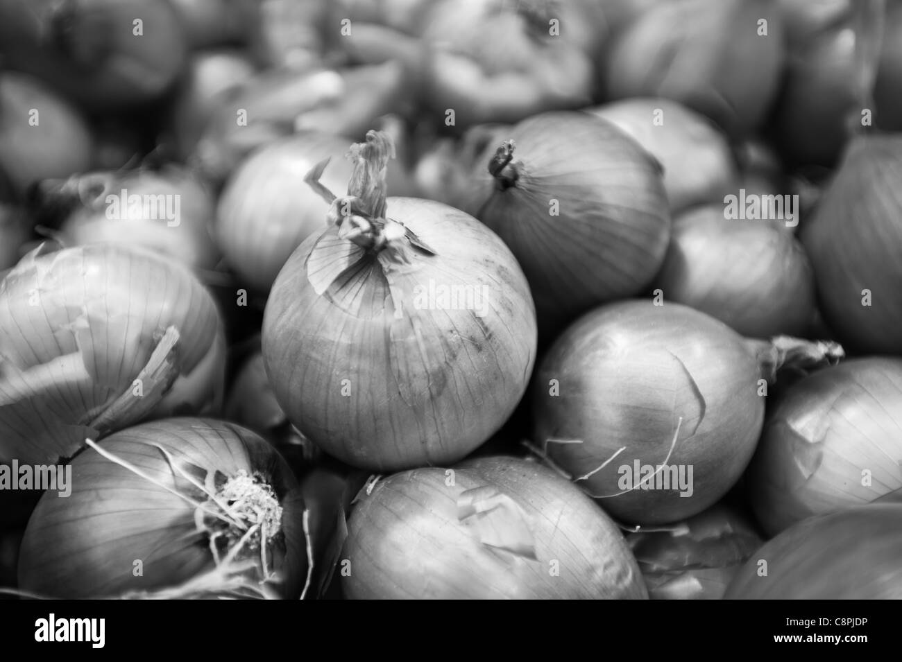 Black and white onions in a food stand. - Stock Image