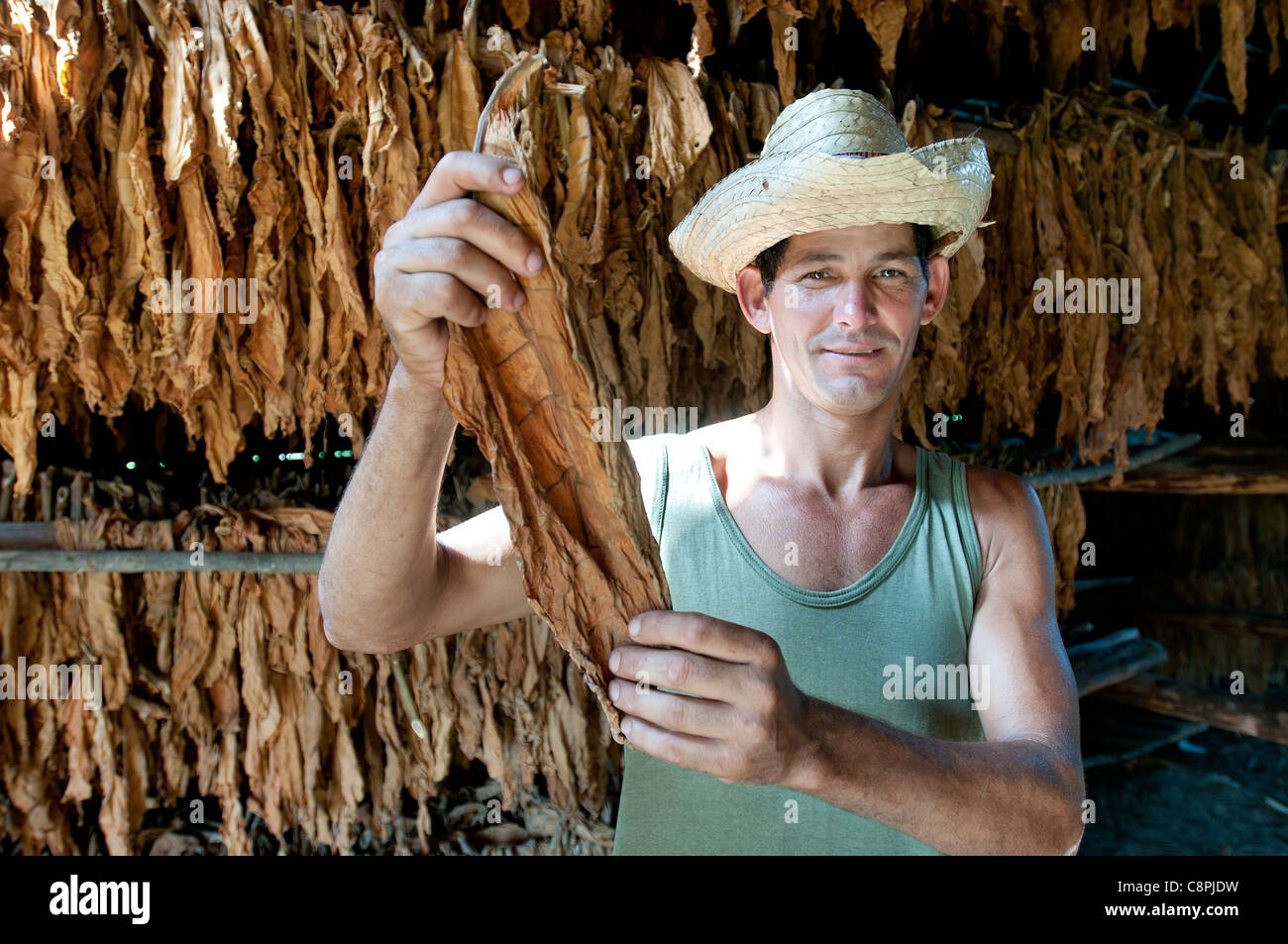 Leaf drying barn on tobacco farm with farmer, Vinales, Cuba - Stock Image