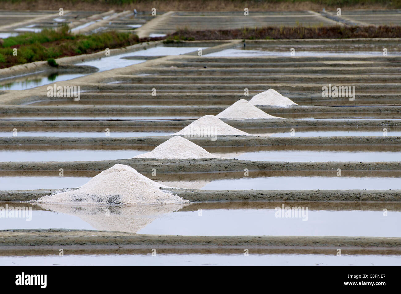 Fleur de sel (hand-harvested sea salt) skimmed of the salt beds close to Pont d'Armes in the Loire-Atlantique - Stock Image