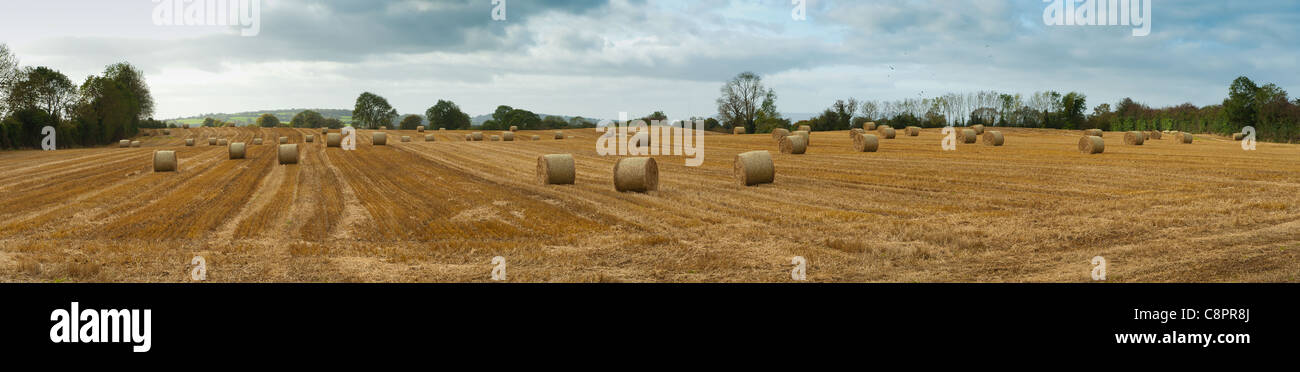 pales of hay panorama Stock Photo