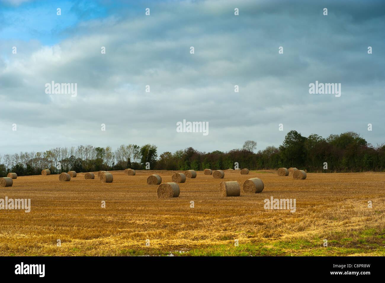 pales of hay Stock Photo