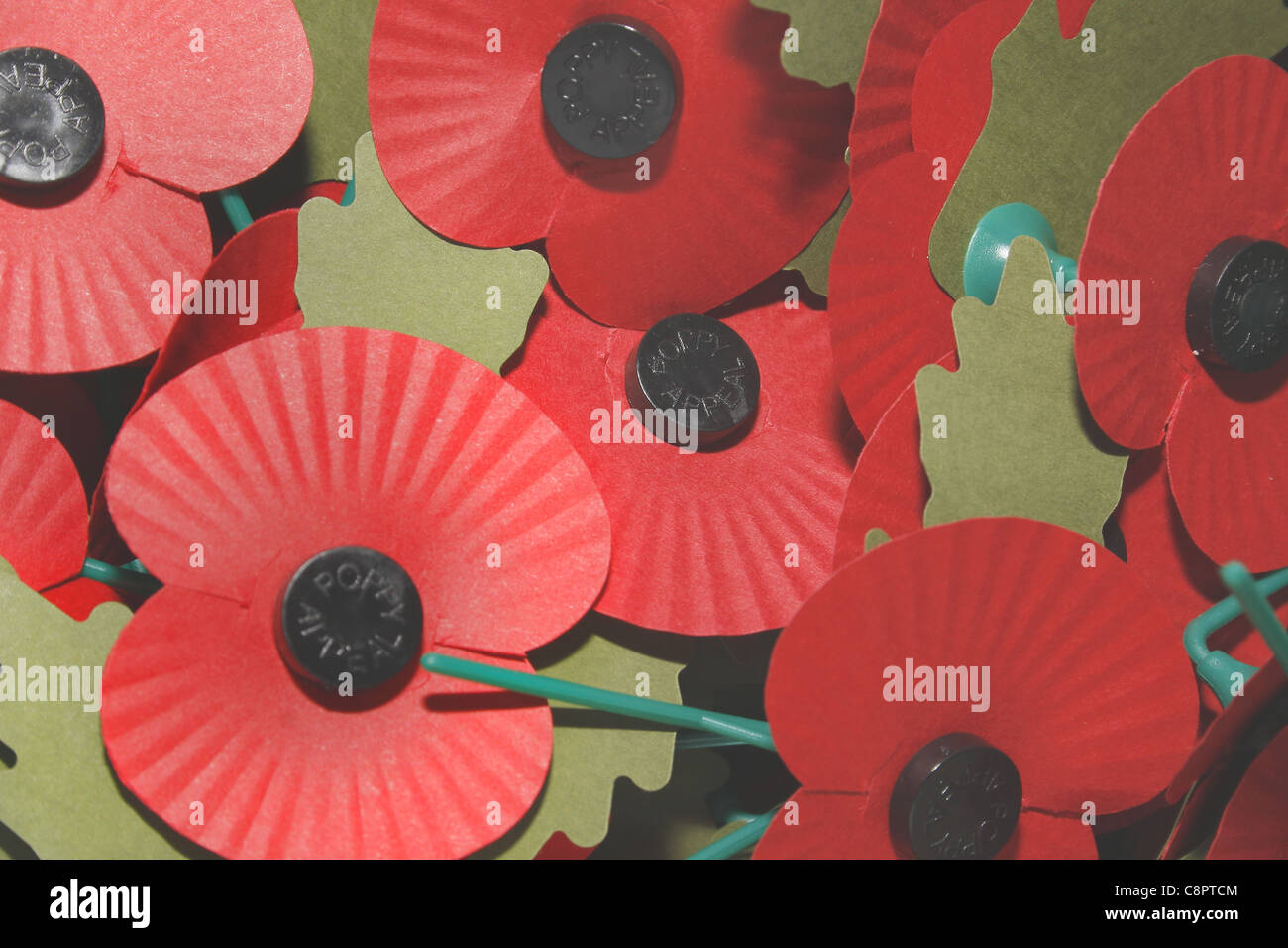 image of red poppies commemorating world war - Stock Image