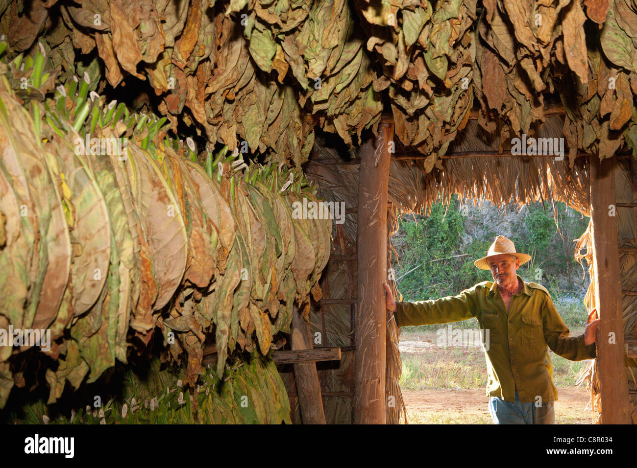 PINAR DEL RIO: VINALES TOBACCO FARM WITH DRYING TOBACCO LEAVES AND FARMER - Stock Image
