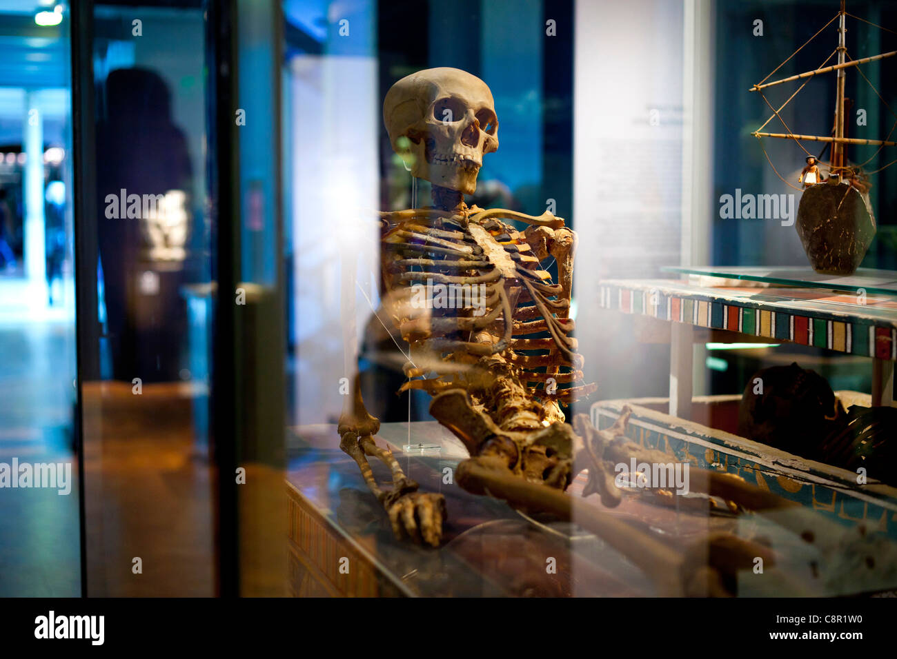 The skeleton of an Egyptian mummy on display at the Manchester Museum at the University of Manchester in the UK - Stock Image