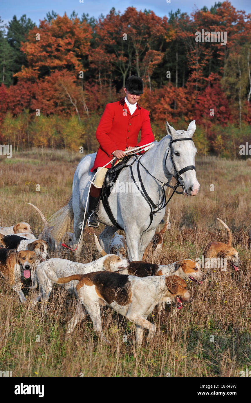 Hunter wearing red coat on horseback with pack of hounds during drag hunting in autumn, Europe - Stock Image