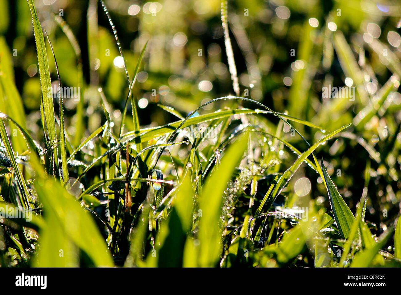 Morning dew - Stock Image