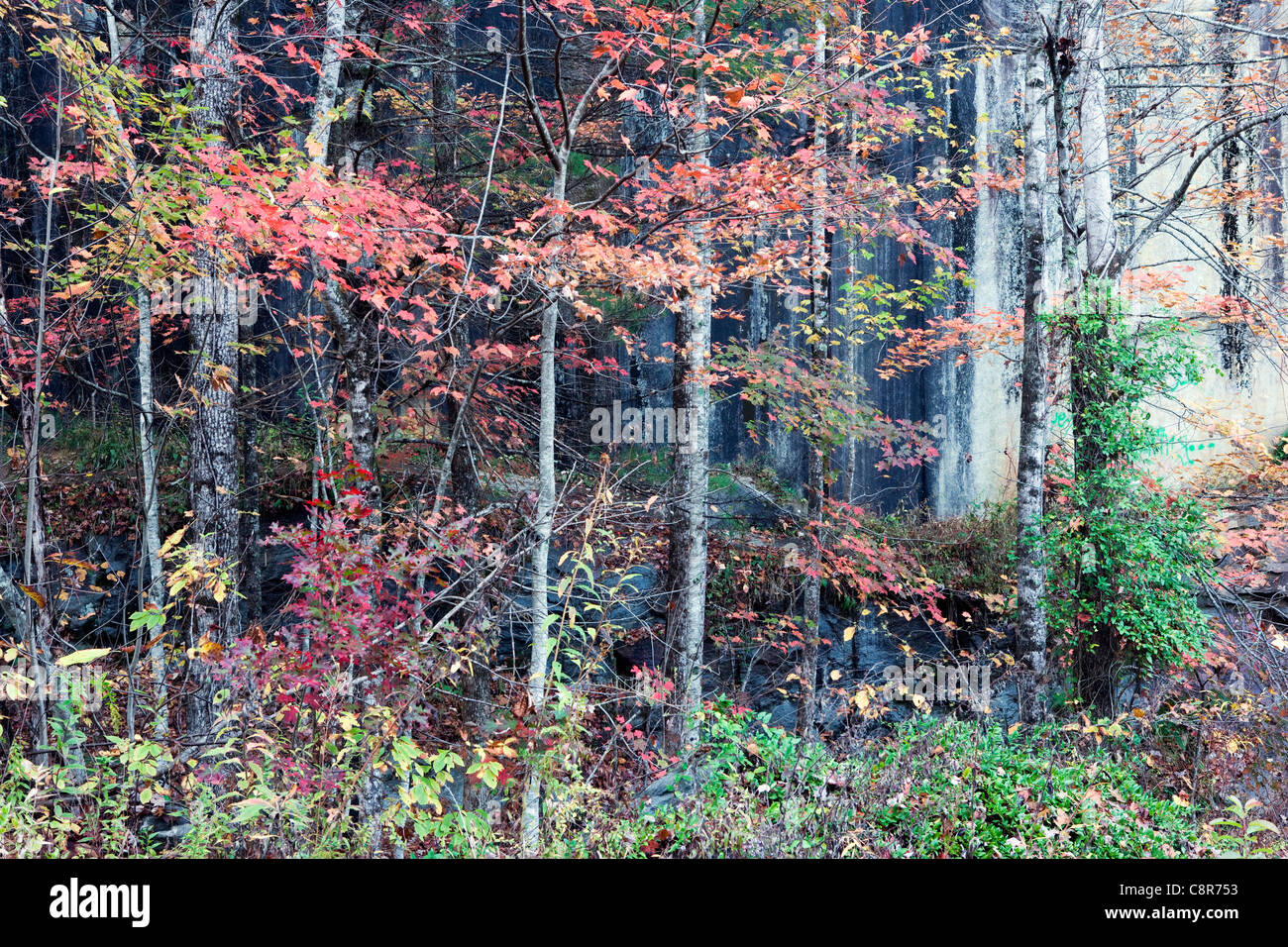 Fall Colors in the Forest - Pisgah National Forest - near Brevard, North Carolina USA - Stock Image