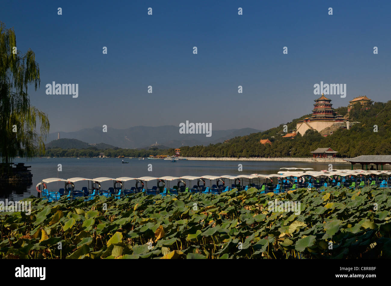 Paddle boats and lotus plants on Kunming Lake with Buddhist Fragrance Temple at Summer Palace Beijing China - Stock Image