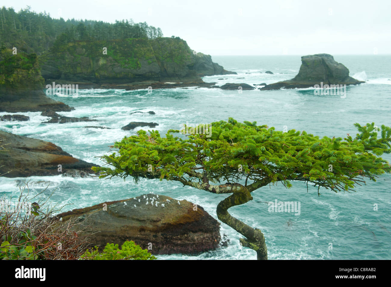 Rocky Shore High Resolution Stock Photography And Images Alamy