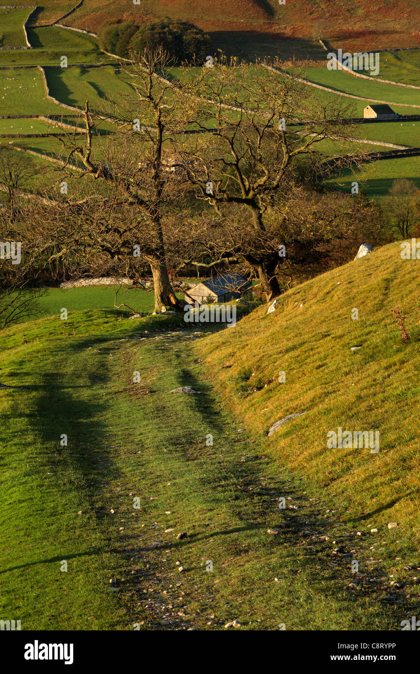 The first rays of sunlight hit the brightly colored autumn foliage of Arncliffe in Littondale, Yorkshire - Stock Image