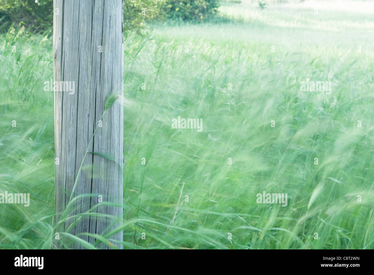 Wooden Pole with Blurred Grass - Stock Image