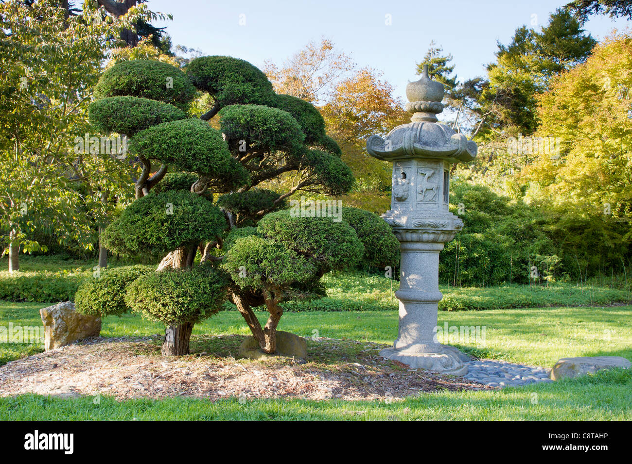 Stone Lantern And Pruned Bonsai Tree At Japanese Garden In San Stock Photo Alamy