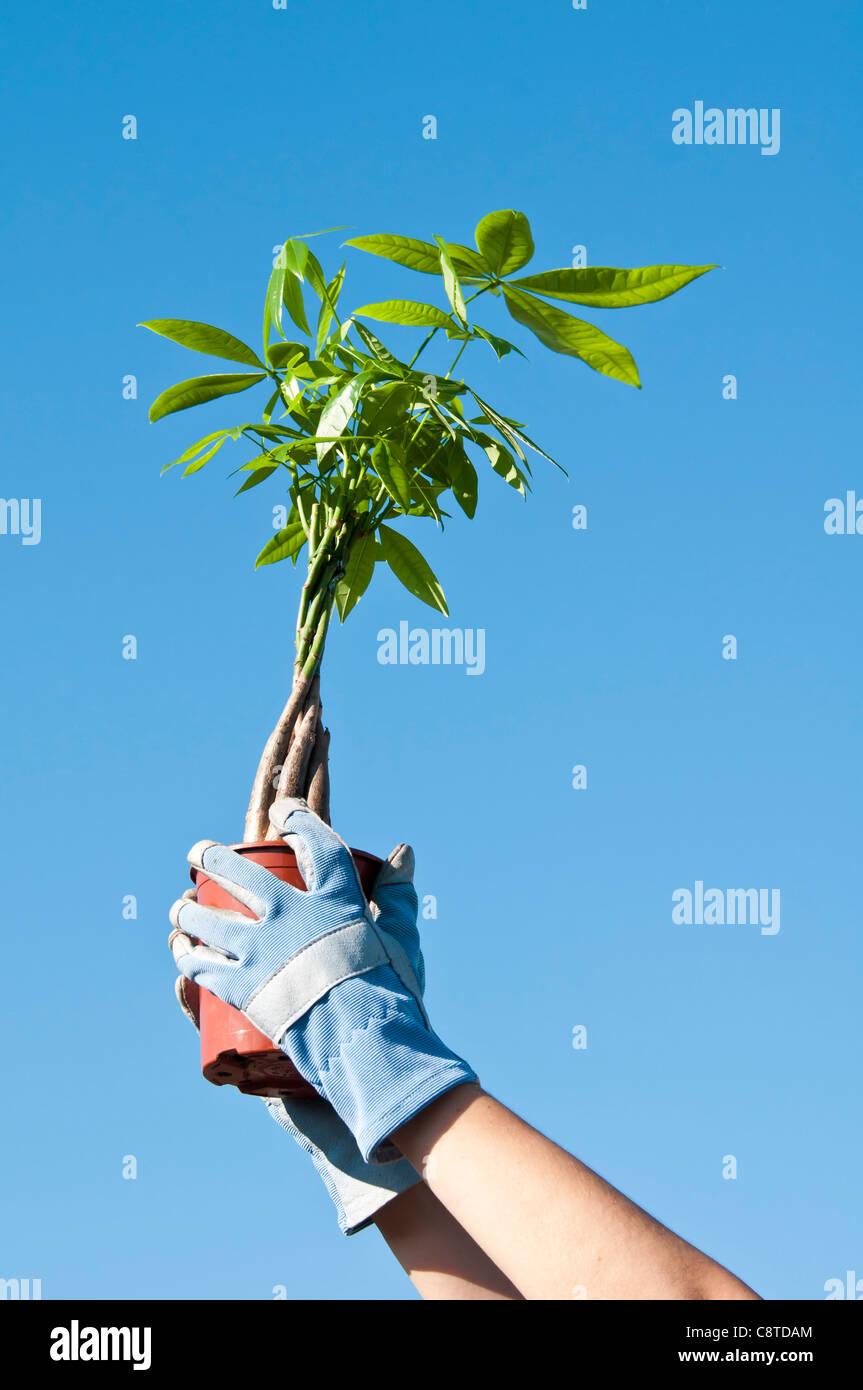 Small tree - Stock Image