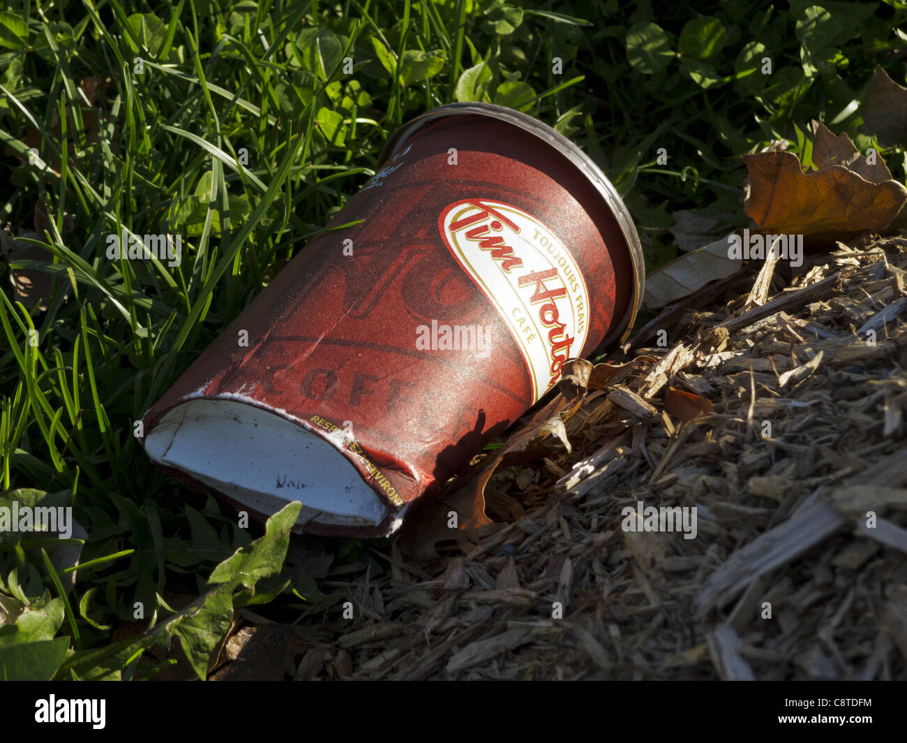 Abandoned Tim Hortons recyclable coffee cup - Stock Image