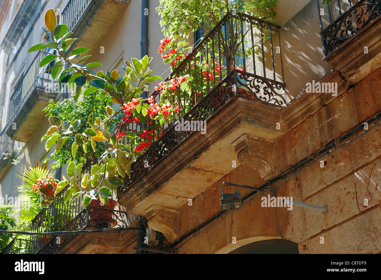 Potted plants on a balcony. Tarragona Old Town, Catalonia, Spain. - Stock Image