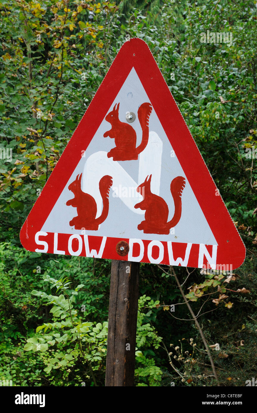 Road sIgns warning of rare red squirrels in the Lake District, UK - Stock Image