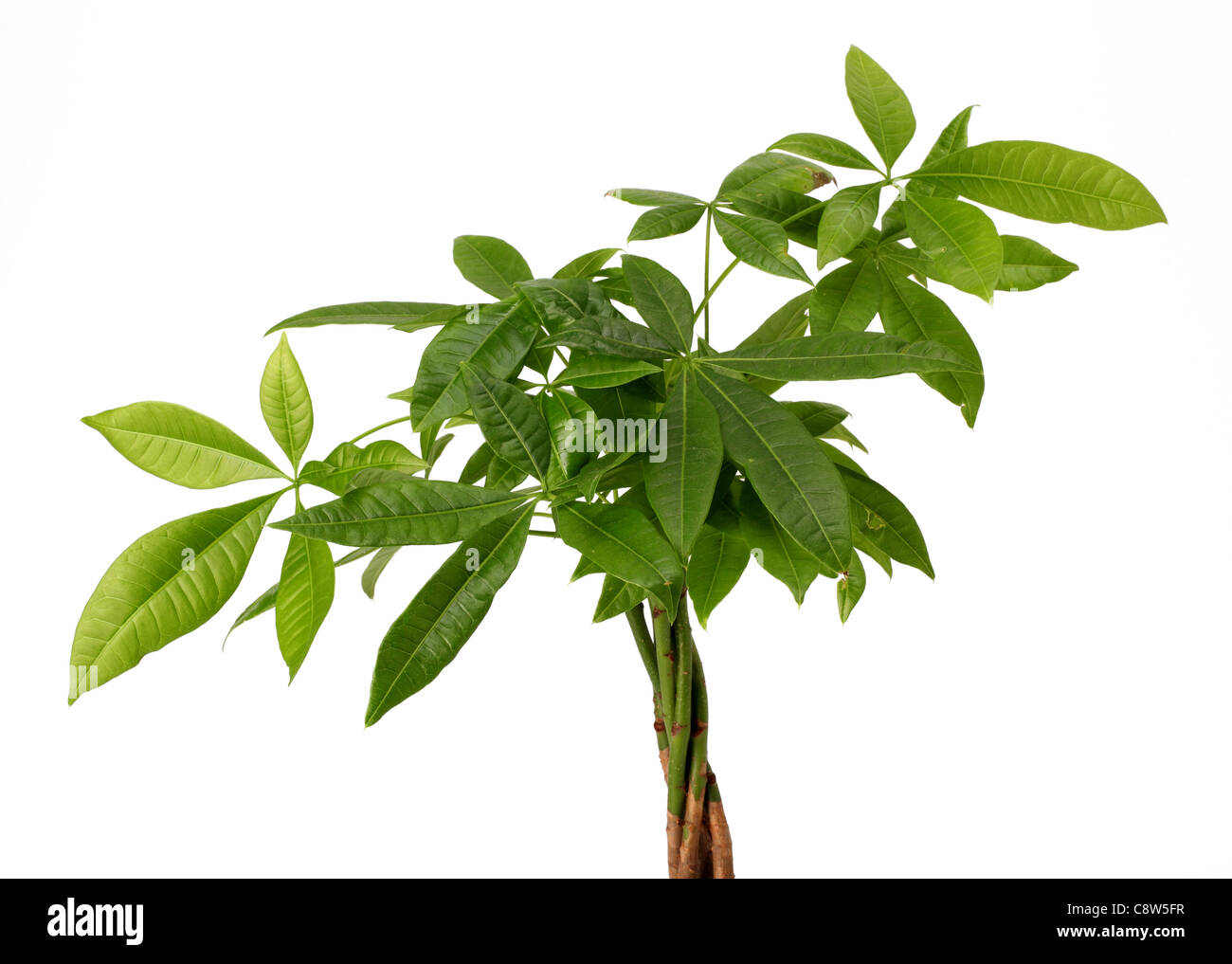 The top of a green house plant. Stock Photo