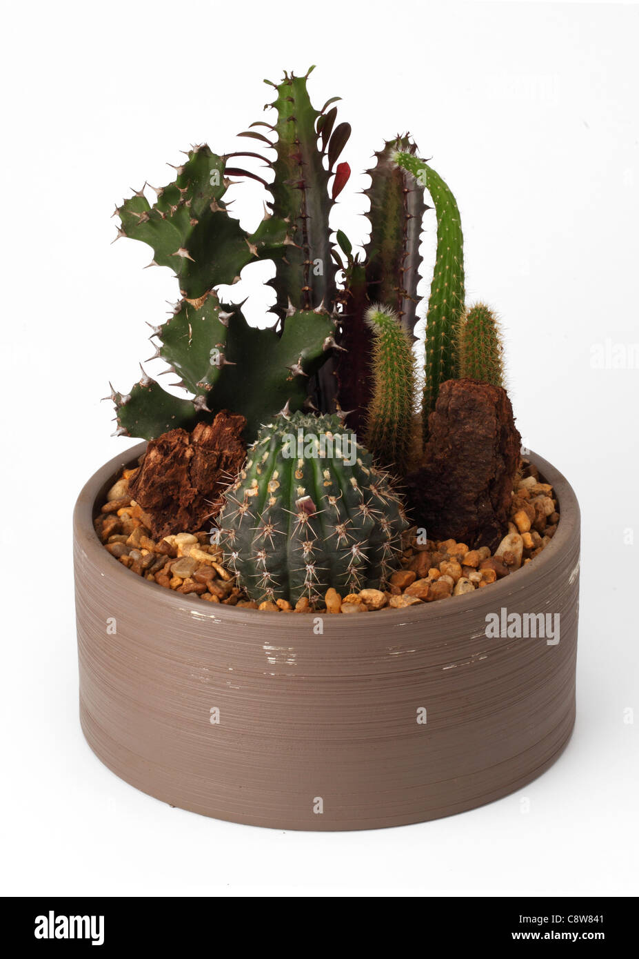 A small terrarium of catus plants - Stock Image
