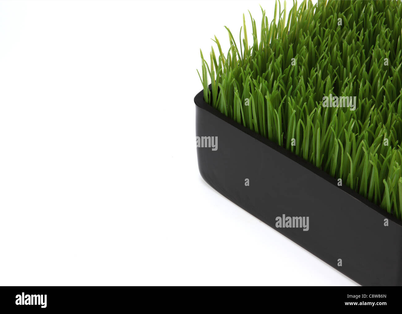 The corner of a container of green wheat grass. - Stock Image