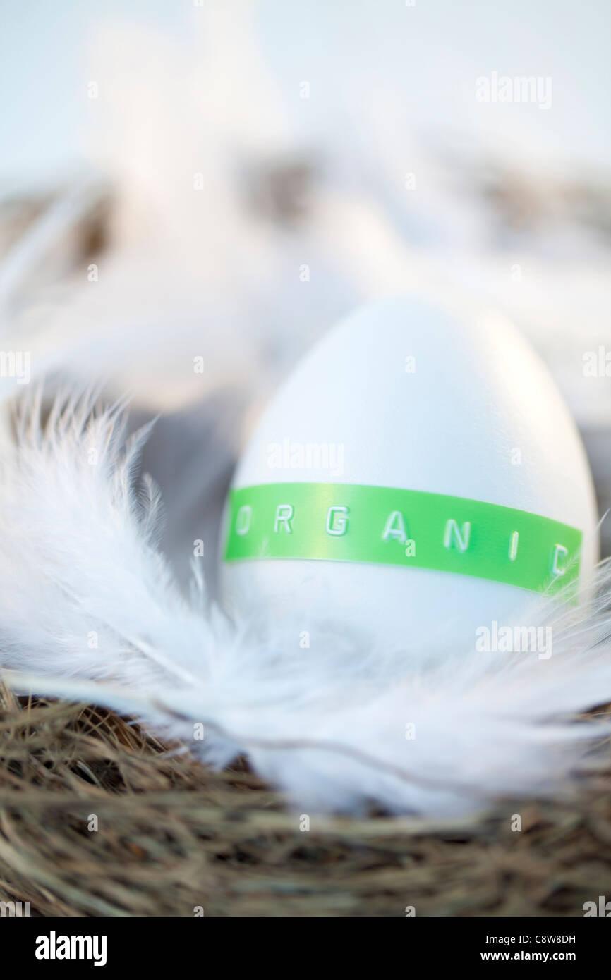 Organic Egg On White Feather Stock Photo