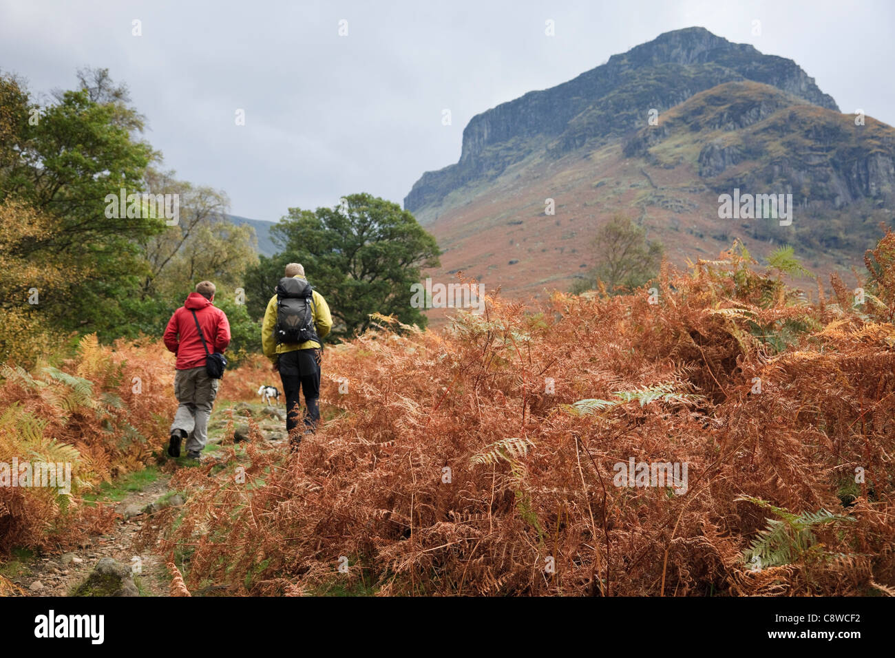 2 Men walking on country walk through bracken fern in autumn in northern Lake District National Park. Stonethwaite - Stock Image