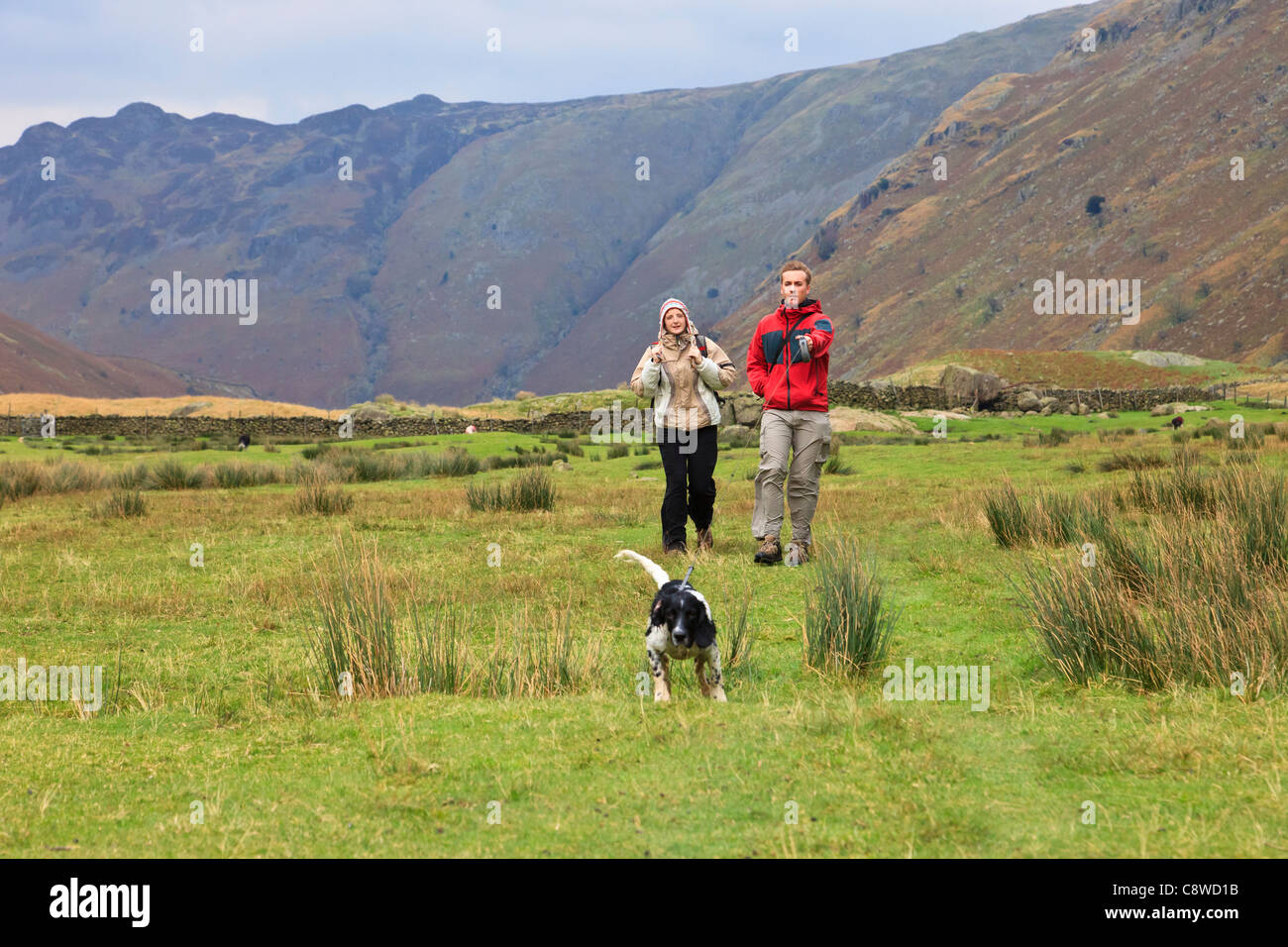 Two people taking a dog for a walk pulling on a long lead in Langstrath Valley in Lake District National Park Cumbria Stock Photo