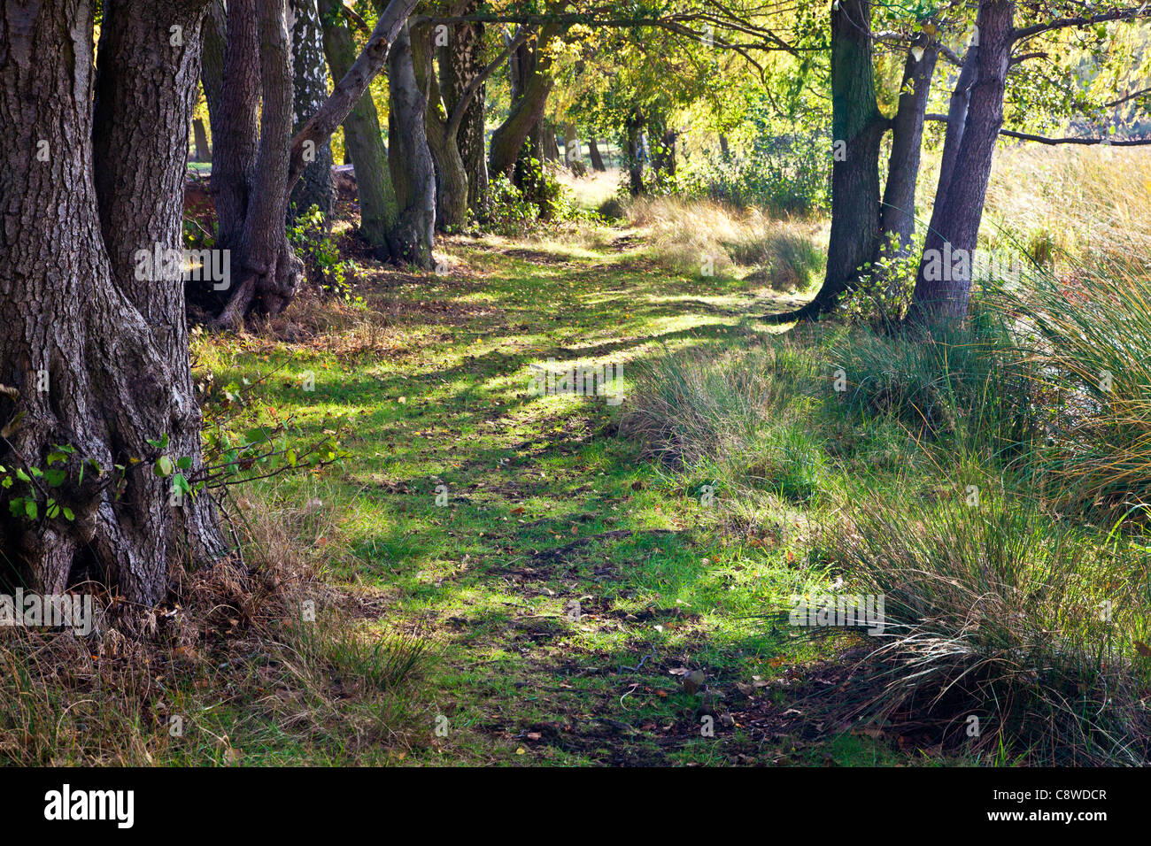 Dappled autumn sunlight filters through trees along a path by the lake, Wollaton Park, Nottingham, Nottinghamshire, - Stock Image