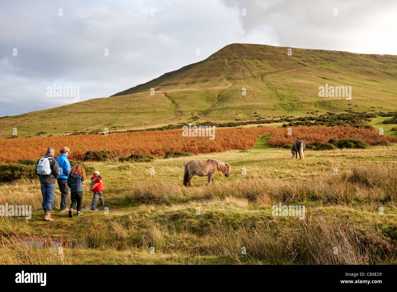 Hay Bluff, walking past the wild ponies towards the summit. - Stock Image