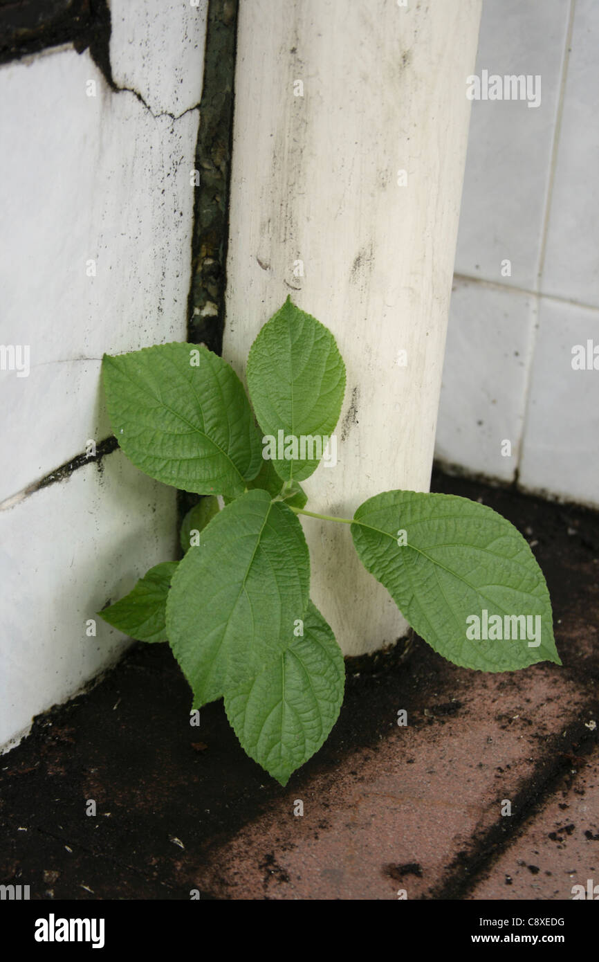 plant growing from the cracks of concrete floor symbolized survival, hope, against odds - Stock Image