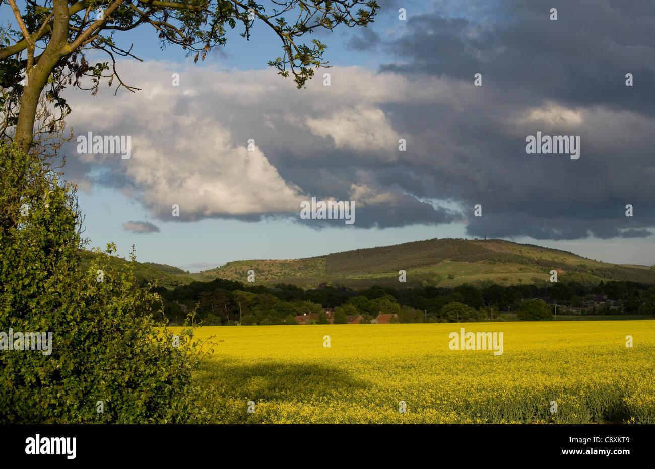 View to Captain Cook's Monument Easby Moor North Yorkshire England - Stock Image