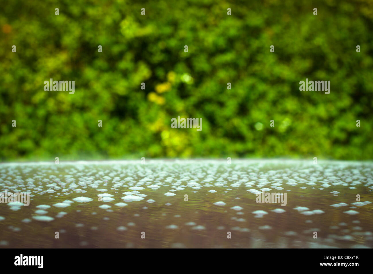 Abstract green bubbles blurred background. - Stock Image
