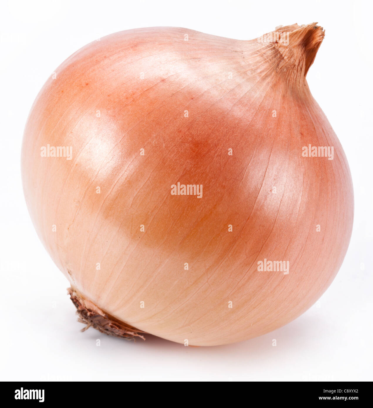 Onion on a white background - Stock Image