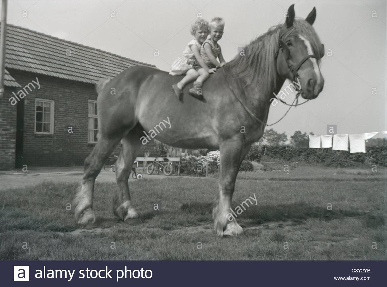 Little boy and girl sitting on the back of a big horse. 1960s Holland - Stock Image
