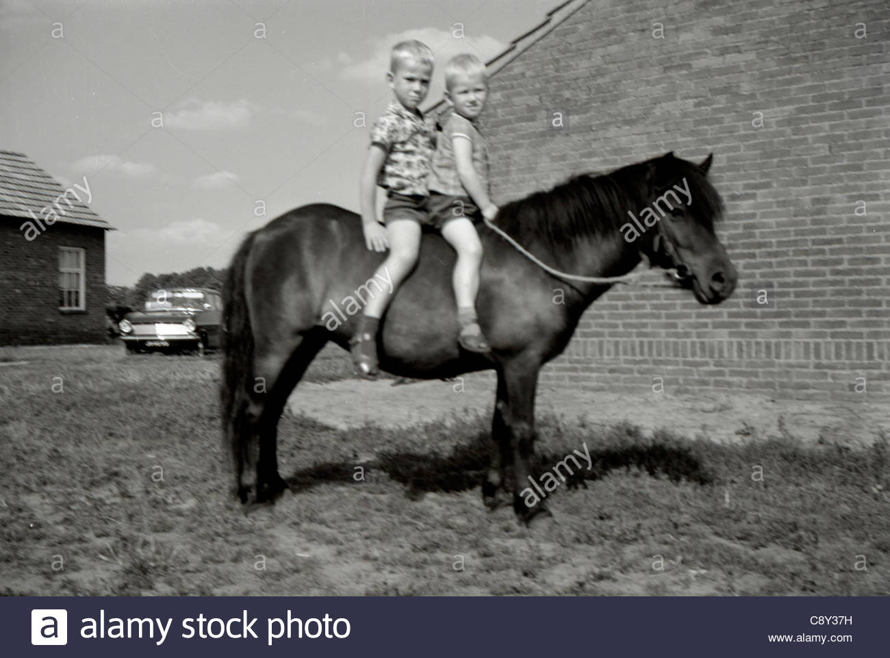 Two boys sitting on a pony 1960s Holland - Stock Image