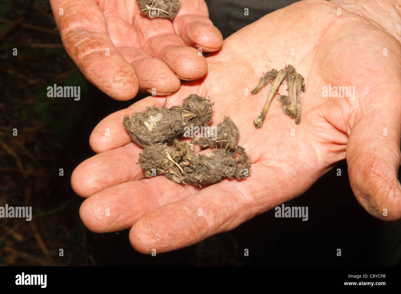 owls barn pellet specialists barns owl pellets hawks the wildlife