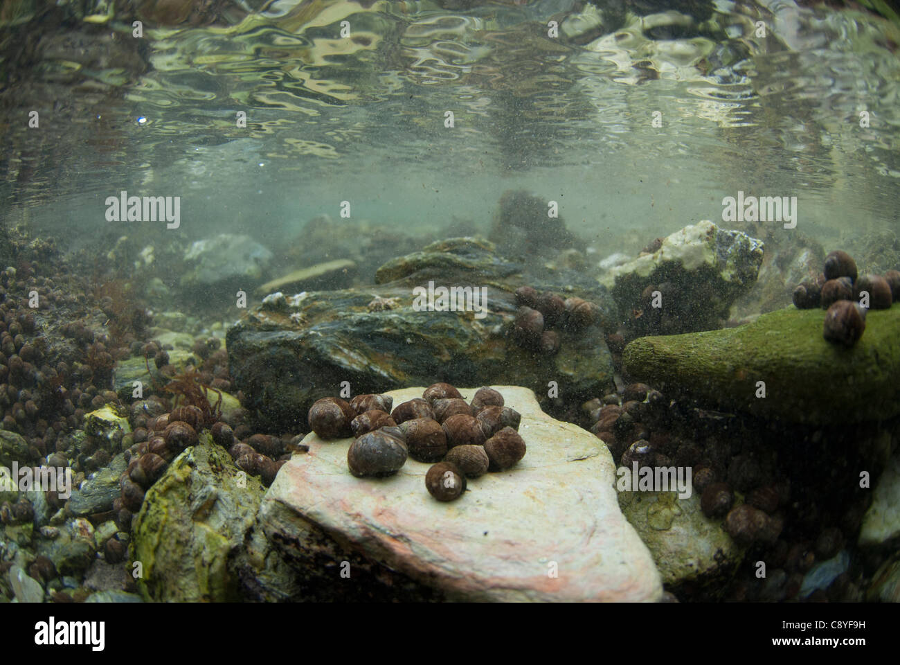 the view from under a rockpool - Stock Image
