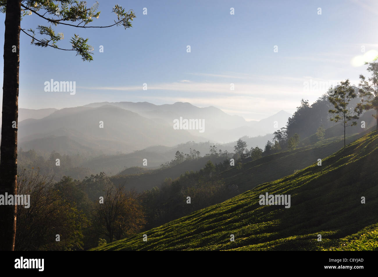 Mist lazily floats away giving way to the morning sunshine in the hills of Munnar - Stock Image